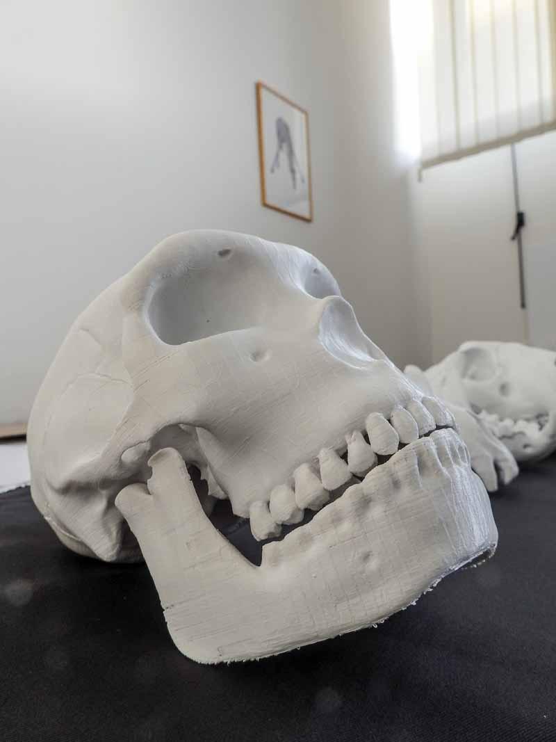 Paleontologia 3 Crani Giovanni Giobbi Vona Frosinone Made In Italy
